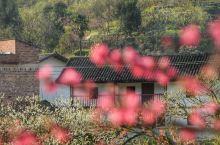 九峰的花海 私藏了整个广东的春天 三月的九峰山,春光明媚,黄的油菜花,白的李花樱花,红的桃花,紫的紫