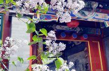 《北京十三陵附近藏着个艺麓园》  偶然间去到的一处古建院落,还挺漂亮的,正赶上丁香花开,衬托的更是美