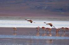 中午在安第斯山的湖边野餐和欣赏Flamengo(安第斯山火烈鸟) ,接着穿过了Siloli沙漠(45