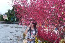 2011年20岁的我在深圳锦绣中华民俗村,那会真是满脸的胶原蛋白,后面一张是2018年再次到深圳游玩