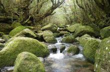 沉默的幽玄之境 ——白谷云水峡  因为是动漫迷,日本的宫崎骏先生的动漫《幽灵公主》所描绘的美丽景色和