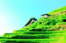 都说 桂林·广西  山水甲天下,可桂林的特产却不止山和水,还有美丽壮观、魅力无穷的 龙脊梯田  。