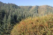 深秋的焉支山,分外妖挠,红的野果,黄的树叶,绿的松柏,清晨的白的霜花…,各种色彩涌入眼睑,大自然的杰