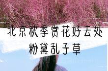 北京秋季赏花好去处/送你一抹粉黛子  今年,北京的七孔桥花海火爆朋友圈,但无奈距离太远。最近,发现了