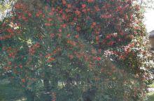 泗水万紫千红生态养生度假村打卡