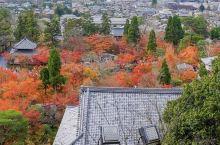 永观堂原名为禅林寺,是位于东山山麓静谧的古刹,由弘法大师的头号弟子,真绍僧都真于西元855年创建。它