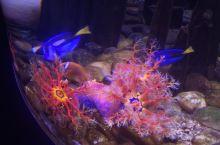 抚顺海洋馆里的神奇鱼类让人惊讶海洋世界的神秘和美丽
