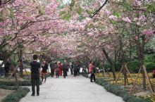 春来上南山植物园,樱花花期短,来时开得正好。旁边的多肉植物馆看一看,有趣。