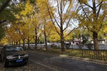 北京的秋天最是万千变化。尤其是那遍植街头巷尾的的银杏树,初秋还青翠碧绿,然后渐渐斑斓、轻金流翠。一夜