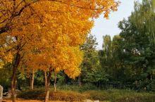 刚拍的济南森林公园,现已经可以看秋景了,还不收门票。  10月底的森林公园,是这座城市最先拥抱秋天的