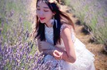 【澳大利亚】南半球的这片薰衣草花海你值得拥有~~   LAVENDER 薰衣草的花语——等待爱情