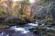 黎坪国家森林公园为国家AAAA级旅游景区1。位于陕西省汉中市南郑县,2002年经国家林业局批准为国家