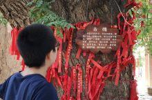 藏于深山里的古村落——赵沟村      位于渑池县赵沟村的一株神奇古槐,已经2500岁了,应该是植于