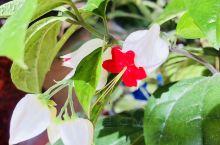 非常漂亮的花儿,不知道确切的名字