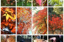 【秋色斑斓】赏枫去,莫干山红叶红艳艳~  地处浙西山脉中的一员,天目山,大明山,莫干山,都迎来了一年