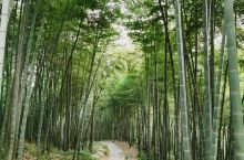 莫干山,翠竹环绕,一片清幽之净地,适合依山而居的小住。