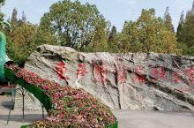 和同事们开心欢聚在祟明东平森林公园,在公园游览合照留念。