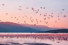 非洲旅行   粉红仙境长廊——博戈里亚湖的火烈鸟~  博戈里亚湖位于非洲东边的肯亚,大裂谷区的边缘,