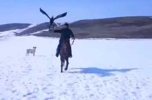 美丽的新疆石河子南山。世代居住着英勇的哈萨克族人。这里的人以放牧为生。训练的老鹰是抓捕猎物的高手。