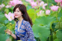 云南,有无数美好的地方,但是要论荷花之美,一定是普者黑。普者黑,全称是文山州丘北普者黑景区,位于云南