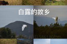 盐洲岛--不一样的旅行方式 盐洲岛又名大洲岛,是广东惠州唯一的一个海岛镇。盛产原盐,得名。据考证,自