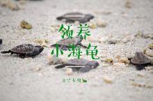 海岛|环保之旅,去兰卡央领养小海龟