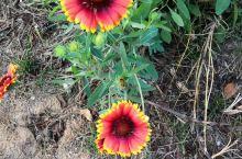 冬天里的花