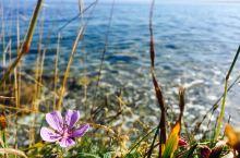 美丽清澈赛里木湖 景点:我最期待的景点之一赛里木湖。真的好美好美!我还摆了一个乌龙,我带了相机却没有