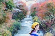 日本 | 小众秘境樱花与枫叶同框 日本的樱花季从每年的3月底开始,一直到5月,从最南边的 九州 开始