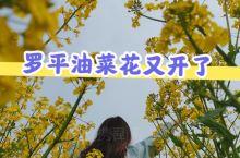 春天是油菜花盛开的季节,走在油菜花的田陌里,那一种泥土气息弥漫着花香,便是生活的味道……边上还有采蜜