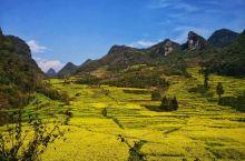 罗平独特的气候,造就了罗平独特的生态农业。每年2至3月,连片的20万亩油菜花在罗平坝子竞相怒放、