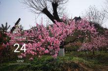 这里是陕西渭南市的桃花源景区。空气格外的清新,到处绿树成荫,桃花盛开,令人流连忘返。疫情慢慢的在好转