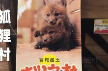 撸狗撸猫,有人撸过狐狸吗? 日本宫城县藏王白石狐狸村。 我的天! 小狐狸们怎么这么可爱呀!  【交通