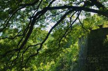 海曙区茅镬村古树林