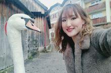 在哈尔施塔特活捉大鹅 冬天去的哈尔施塔特,除了冷之外其他都很完美。清澈的湖水倒映着雪山,神仙一样的地