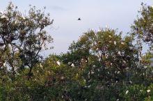 渔村日落时分,好多鸟