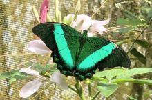 菲律宾达沃伊甸公园的蝴蝶园