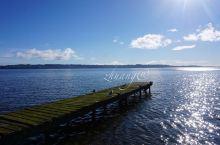 【撸羊记】 在lake rotorua的岸边,随着清晨第一缕阳光的照射,伴随着成群结队的鸭子,制造的