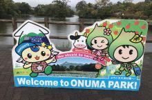 北海道第三天我们来到了函馆的大沼国定公园,山清水秀很有大自然风情的地方,林中漫步时不时能遇上已经红了