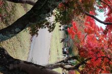 奈良公园的鹿!
