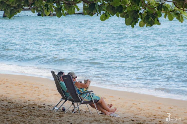 Palm Cove1
