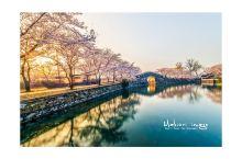 无锡本土老司机,教你玩转最美樱花季!  地球人都知道,无锡鼋头渚连续几年成为国内赏樱第一的网红地。当