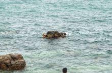 杨梅坑在深圳的众多海域里算是很优秀了,具备了许多度假景区的必备条件,漂亮清澈干净的海,火山地壳变动形