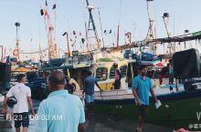 清晨,斯里兰卡的美蕊沙渔港一片繁忙,远航靠岸的渔船,带回了滿船的金枪鱼,批发给当地的鱼商,看着鱼贩们