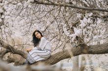 除了日本的樱花,中国的杏花村简直就是世外桃源  4月,是万物复苏的季节,而新疆也在这时节正悄然换上新