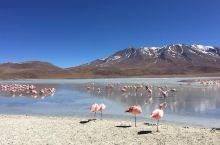 终于到了!打卡!天空之镜! 玻利维亚的乌优妮有一个超级有名的地方,那就是天空之镜——Laguna H