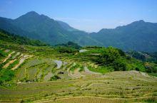 """云和梯田是华东地区最大的梯田群,被称为""""中国最美梯田""""。景区内拥有梯田、云海、山村、竹海、溪流、瀑布"""