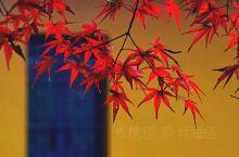 大美虞山的枫叶2