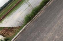 水稻田,第一次见