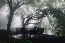 大雨日,莫干山雨下得很美。